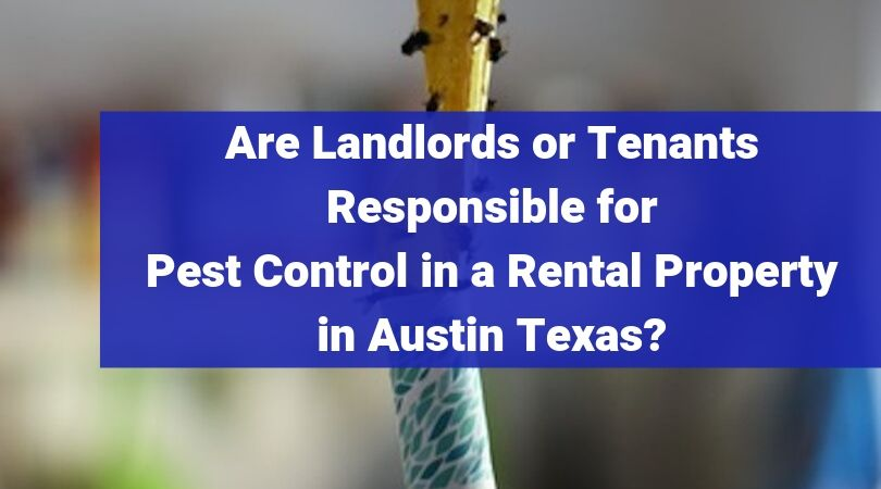 Are Landlords or Tenants Responsible for Pest Control in a