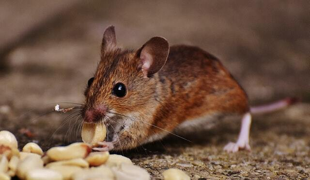 bad smells are a sign of pest activity